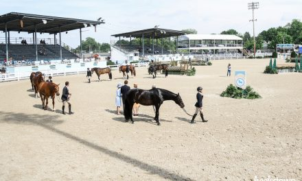 Business Lessons from the Devon Horse Show: Modernizing Tradition