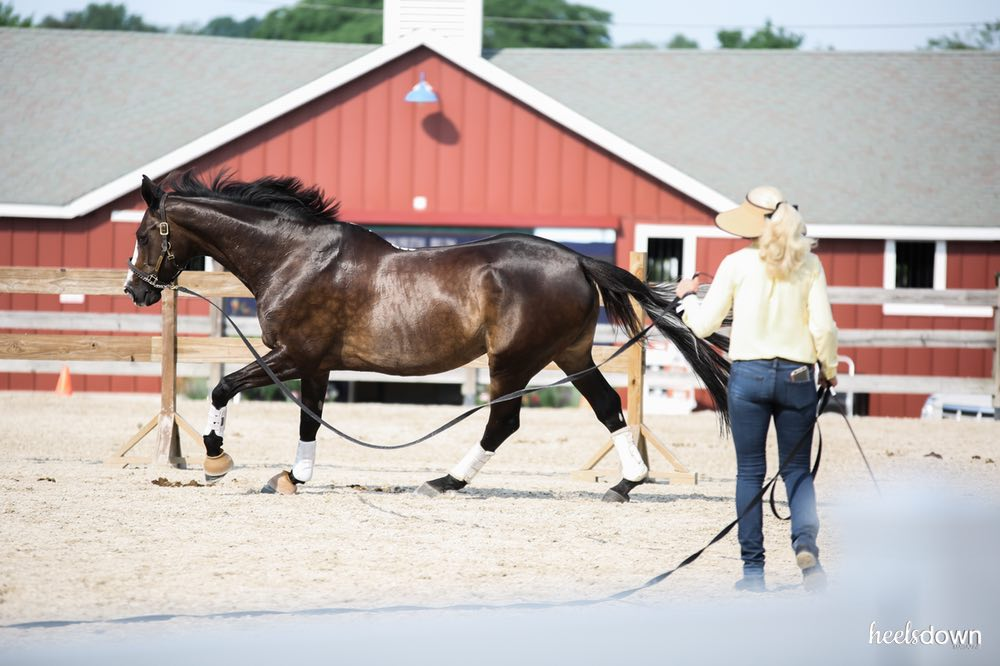 Think Like a Horse Trainer To Get Owners and Sponsors