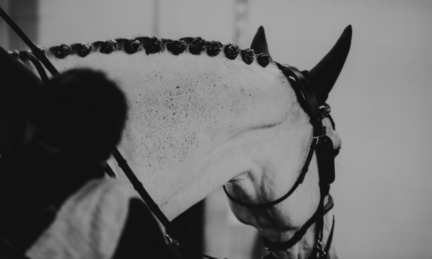 Social Media In Times of Equestrian Scandal